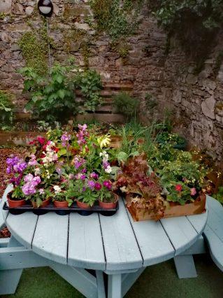 Dowpatrick Garden Donation