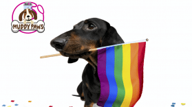 Puppy Pride Flyer