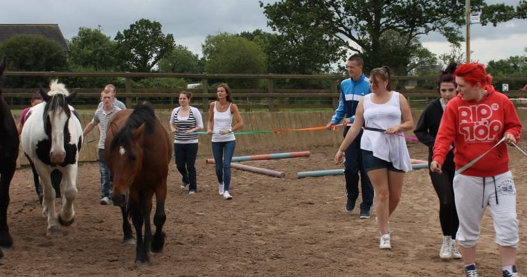 Young people working with horses in the Equines assisted group project